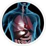 metabolism-analysis